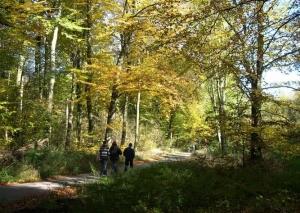 Blühende Auszeit, Wald, Wanderer